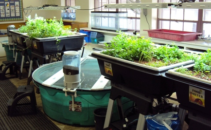 Aquaponics lab - Manzo - websize